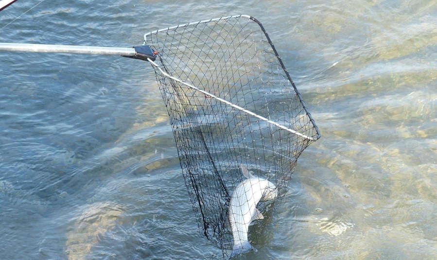 guadino da pesca richiudibile